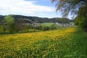 Westfeld